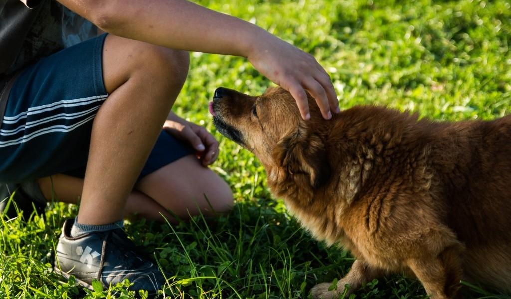 certificazioni prodotti cosmetici animali